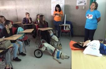 Chile Mestizo: el desafío de Publicidad UDD que sensibilizó a los estudiantes